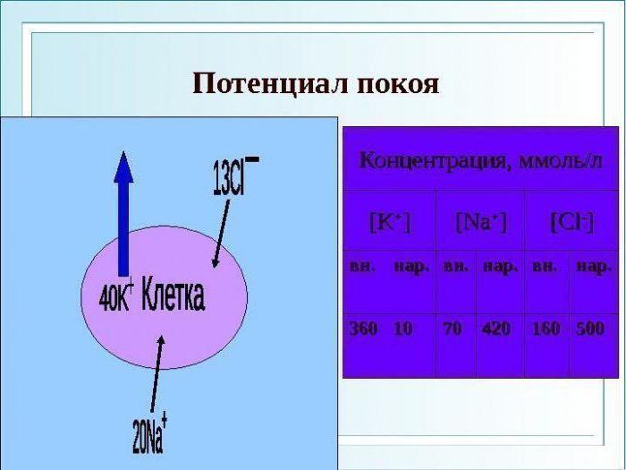 Критический уровень деполяризации мембраны