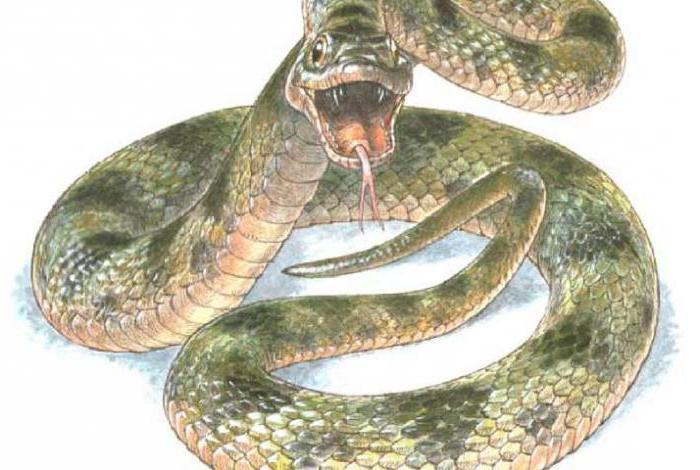 Напала змея, сонник