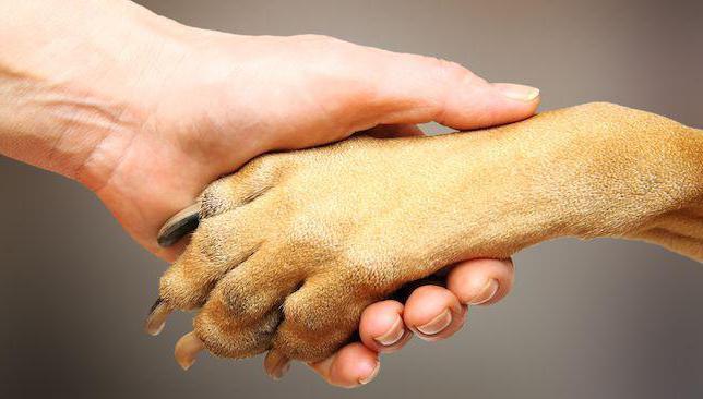 сколько пальцев у собак