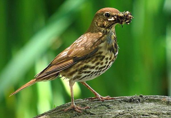 знакомство с декоративными птицами