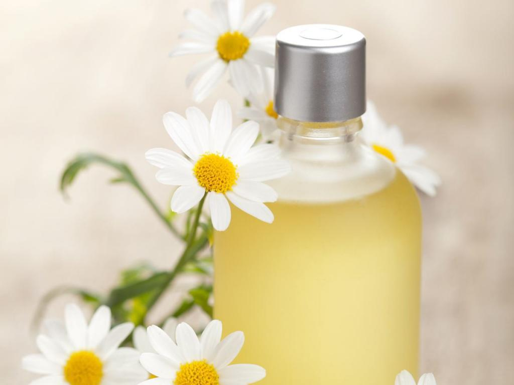 medical uses of camomile Other uses for chamomile herb chamomile tea is used as a liquid feed and plant tonic, effective against a number of plant diseases an essential oil from the whole plant is used as a.