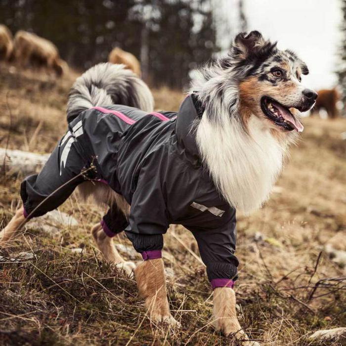как снять мерки с собаки для комбинезона