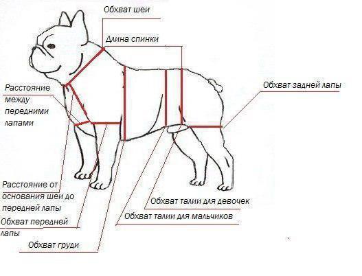 выкройка комбинезона для собак