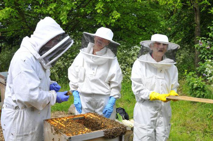 Выкройка костюма пчеловода