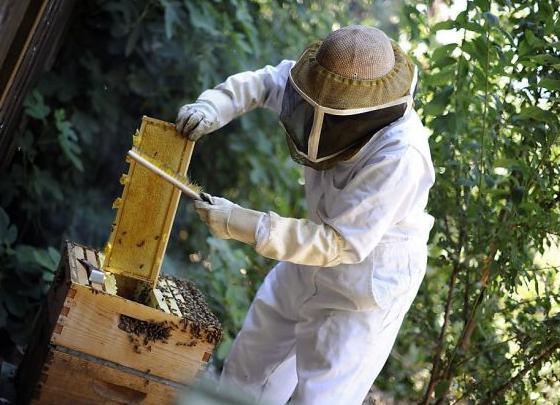 костюмы пчеловода
