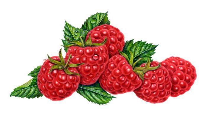 How to paint raspberries with a pencil