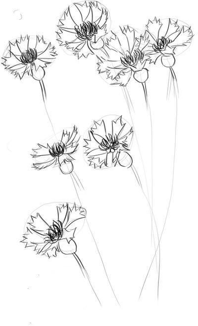 нарисовать василек карандашом