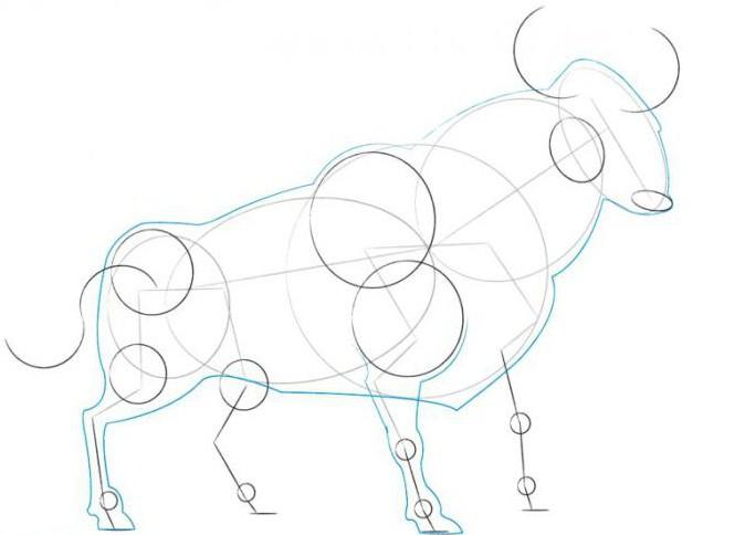 How To Draw A Bull Hero Of The Spanish Bullfighting