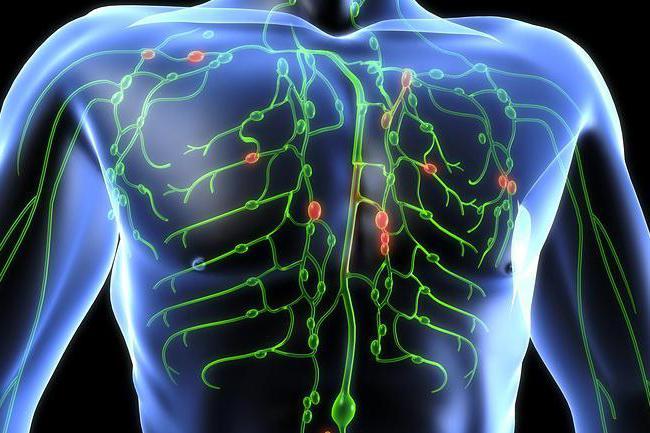 где в теле человека размножается малярийный паразит?