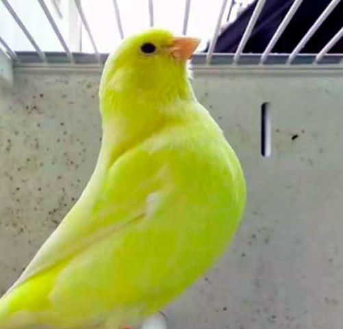 Ловля и содержание певчих птиц: виды, описание, кормление и уход
