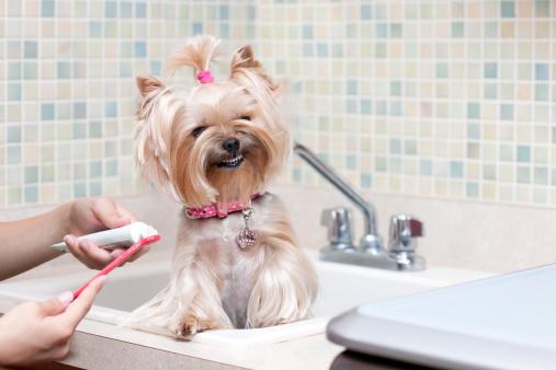 Кариес у собак: причины и методы лечения. Ветеринарные стоматологи