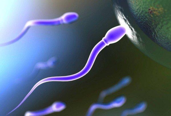 Тошнит после месячных может это быть беременность 19