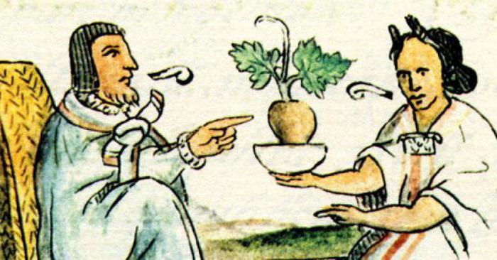 травник лекарственные растения и их применение