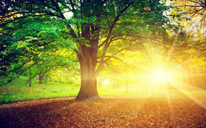 http://fb.ru/misc/i/gallery/45861/1873001.jpg
