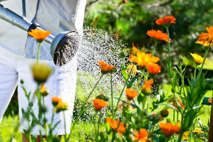 поливание цветов
