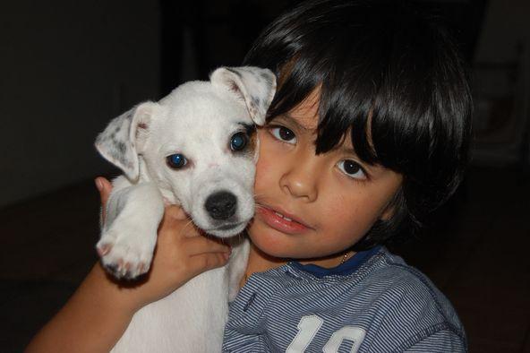 Собака: плюсы и минусы содержания, выбор породы и советы владельцев
