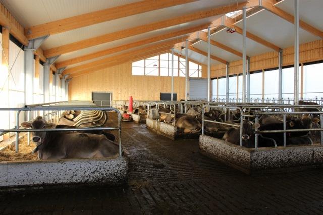 Коровы на мини ферме