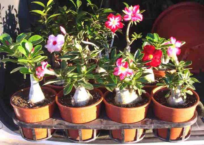 Какие комнатные растения бывают фото