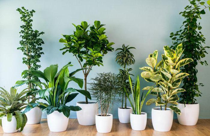 Комнатные растения какие бывают