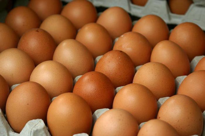 Суточные цыплята уход и правила кормления