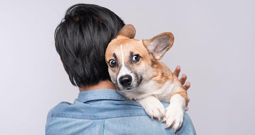 Как не бояться собак? Кинофобия (боязнь собак): симптомы фобии и ее лечение