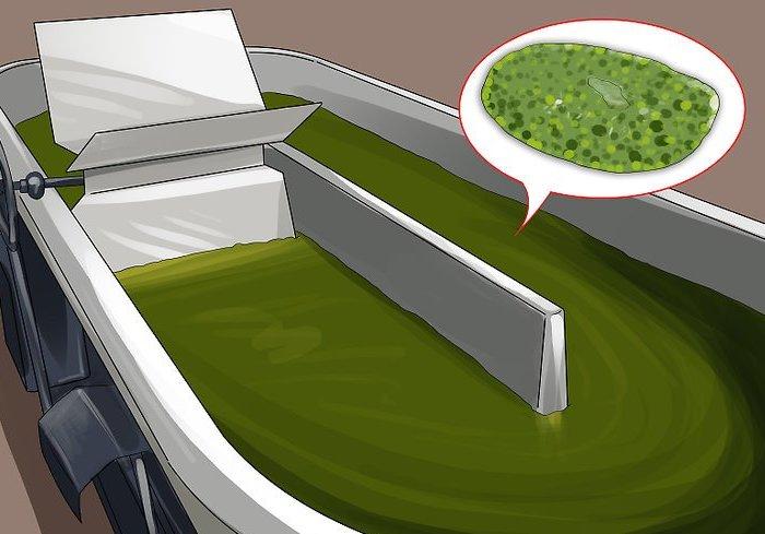 Как вырастить хлореллу в домашних условиях: польза, применение, технология