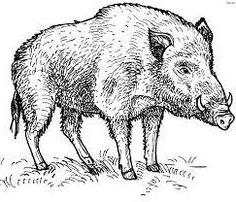 How to draw a boar graphically. Practical advice.