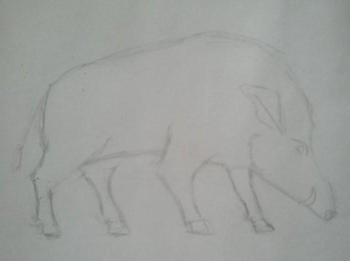 как нарисовать кабана карандашом