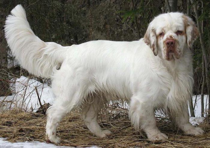 порода собак спокойного харакÑ'ера