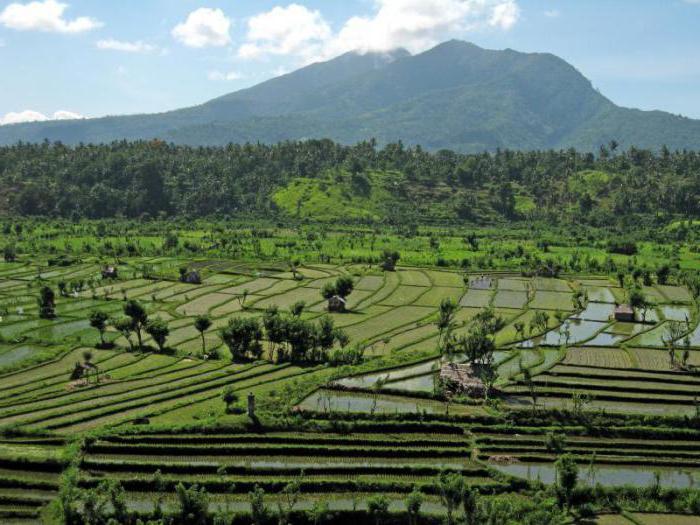 Отдых на Бали. Где лучше отдыхать.