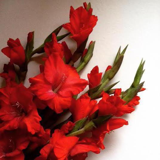 цветы под знаком овен