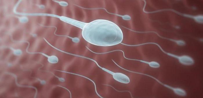 povisit-podvizhnost-spermi