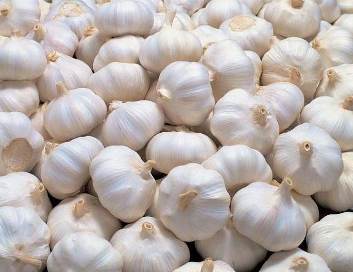 как выращивать чеснок из бульбочек