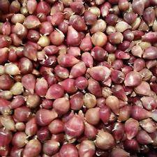 как сажать чеснок семенами