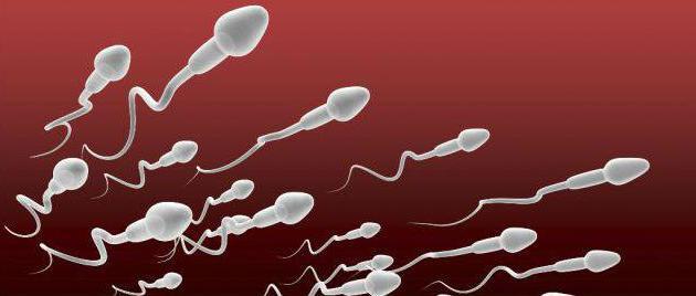 Что такое тератозооспермия