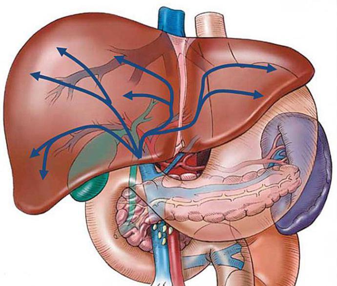 Признаки диффузных изменений поджелудочной железы: что это, симптомы и лечение