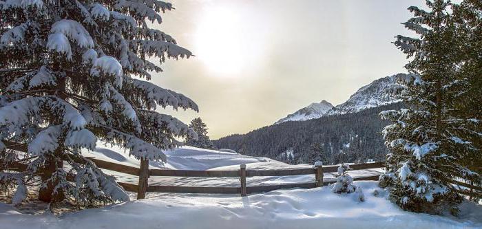 живая природа зимние месяцы