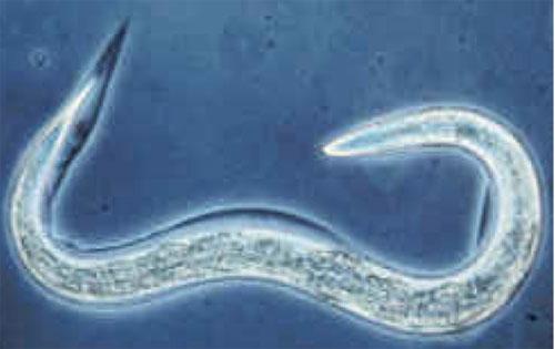 паразиты диагностика лечение