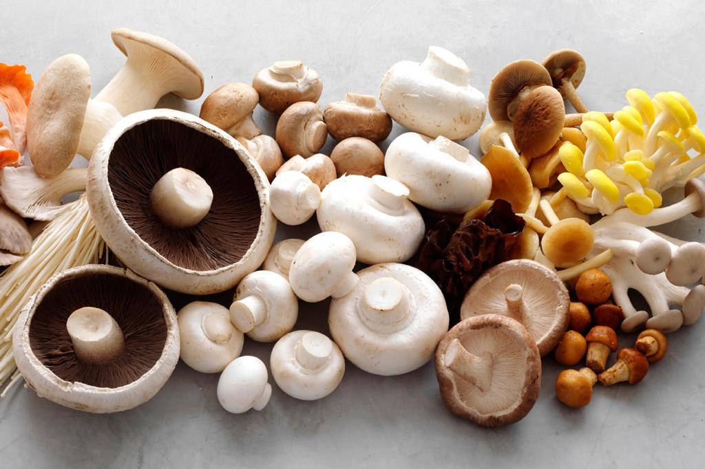 Картинка полезные грибы