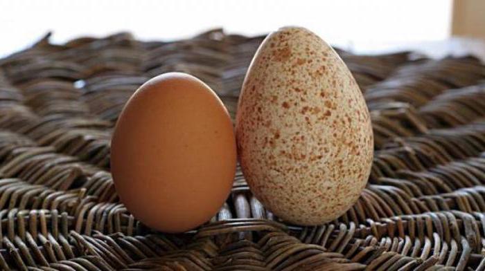 индейка несет яйца