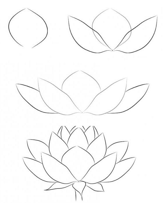 Тренировки для рисования на графическом планшете