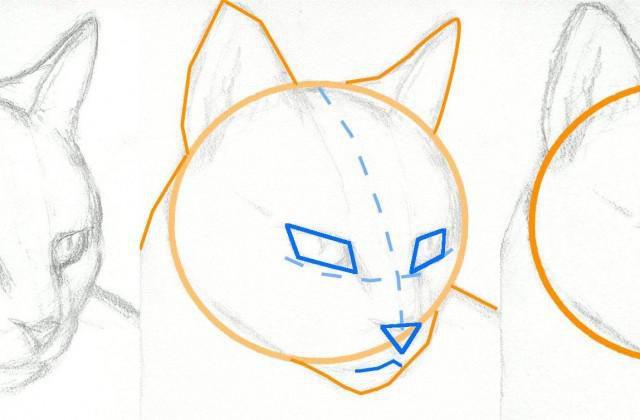 как рисовать котов воителей поэтапно