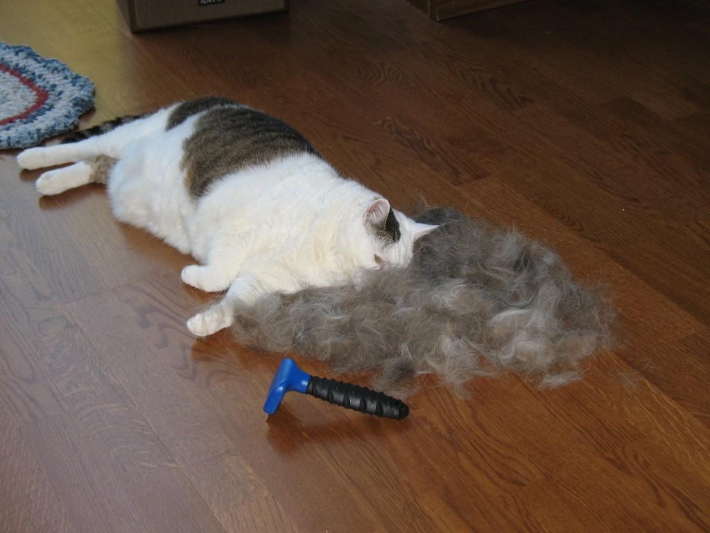 фурминатор для кошек фото до и после как