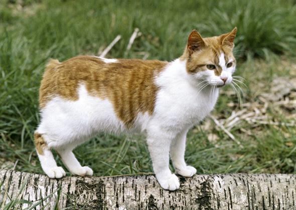 Кошка - размеры и вес
