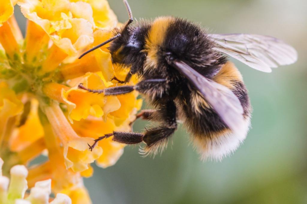 теме картинка как пчела опыляет цветок использованию