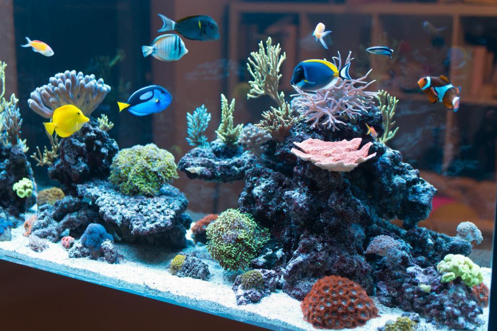 Микобактериоз у рыб: описание, симптомы и лечение болезни