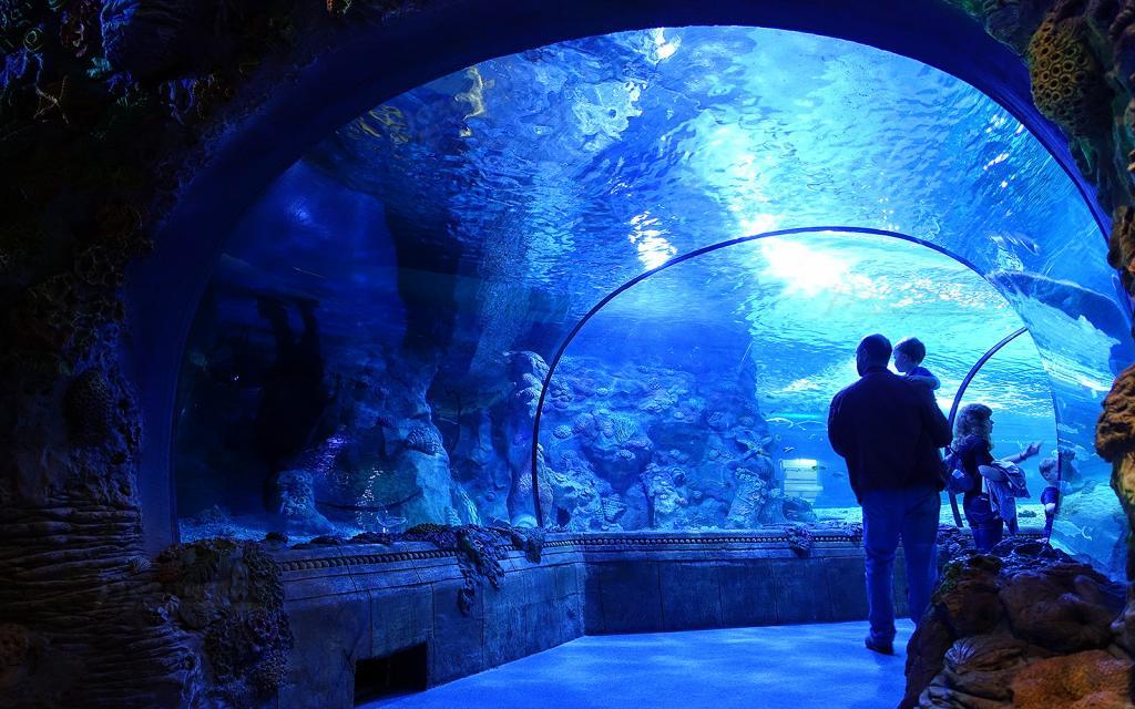 стуча дну, фото московского океанариума начать