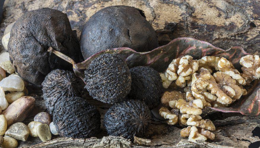 черный грецкий орех свойства