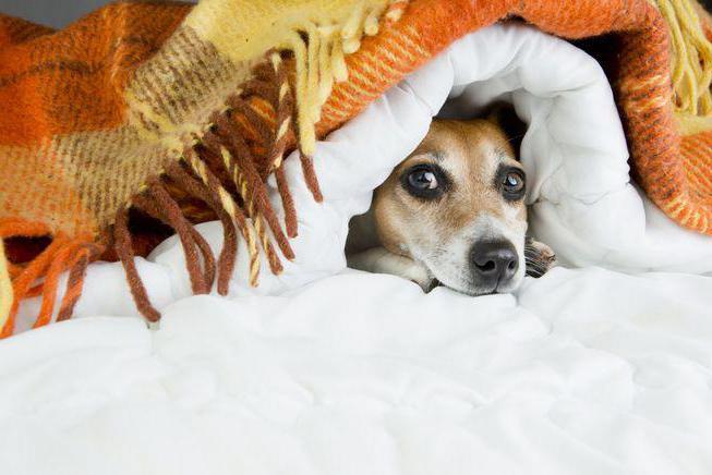 чего боятся собаки