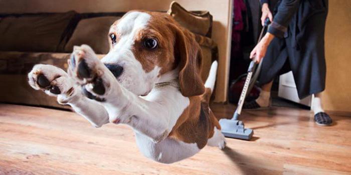 чего боятся собаки полезные советы